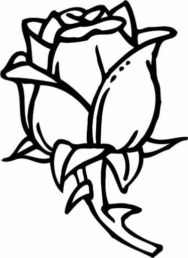 rose color page - Coloring Pages Roses