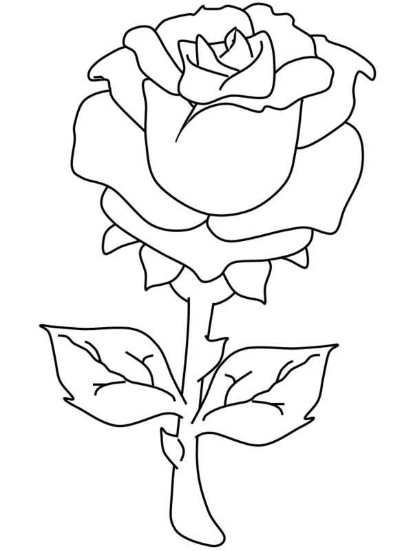 rose color pages - Rose Coloring Pages