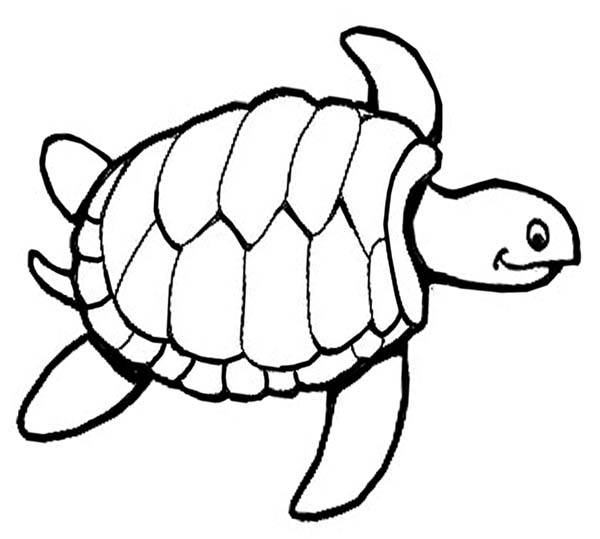 photograph regarding Turtle Printable known as Printable Sea Turtle Coloring Web page
