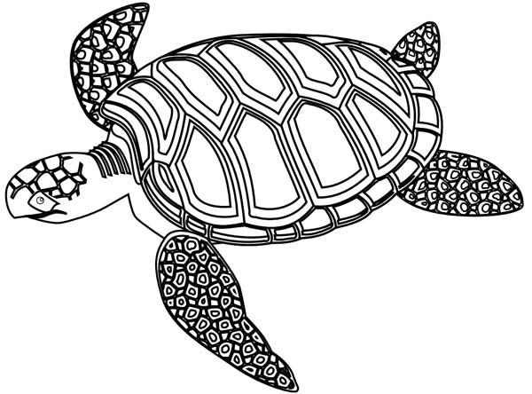 sea turtle coloring pages for adults - Turtle Coloring Pages For Adults