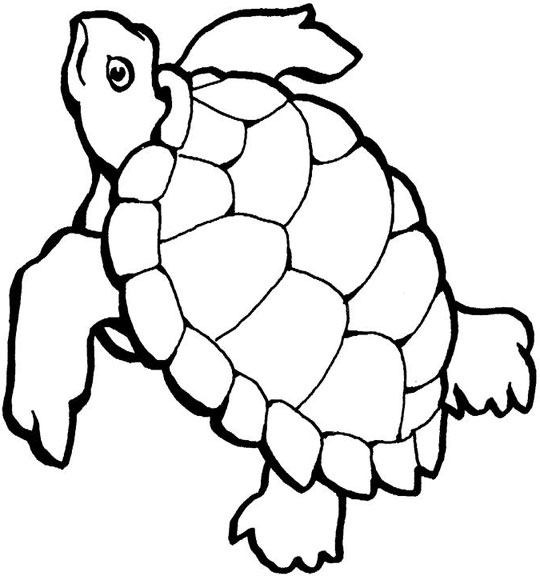 sea turtle coloring sheets