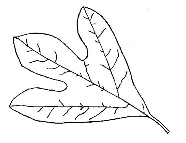 Leaf Coloring Sheets