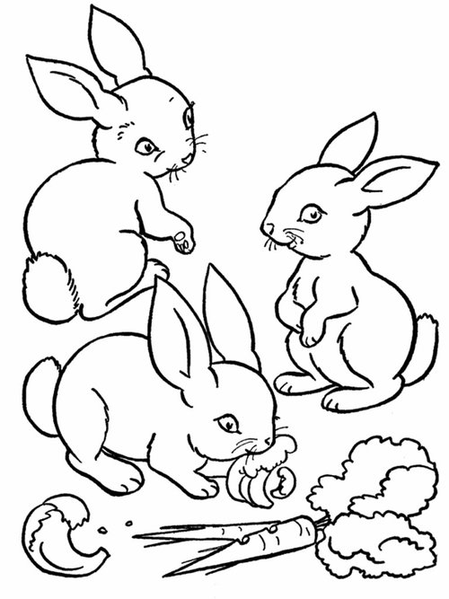 farm animal coloring sheets animal farm coloring pages