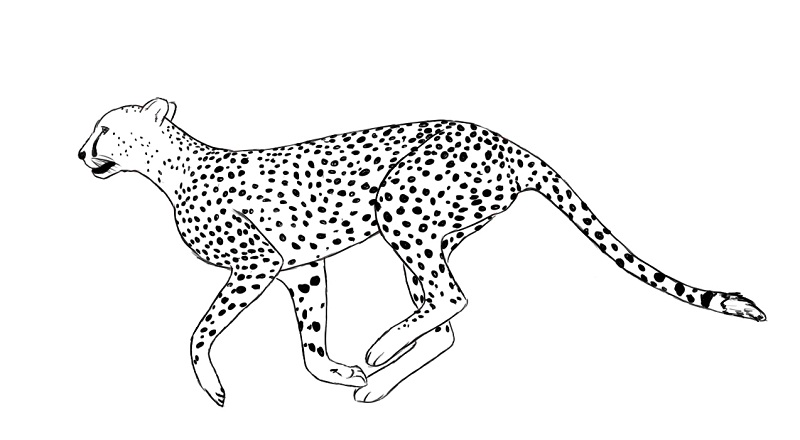Printable Cheetah Coloring Pages | Coloring Me