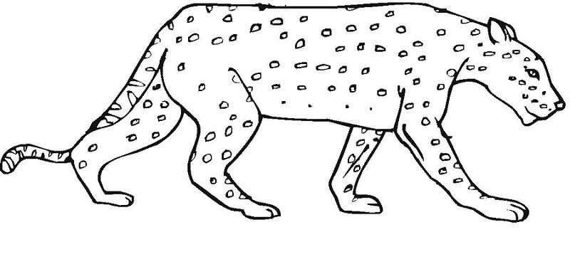 Printable Cheetah Coloring Pages | Coloring Me