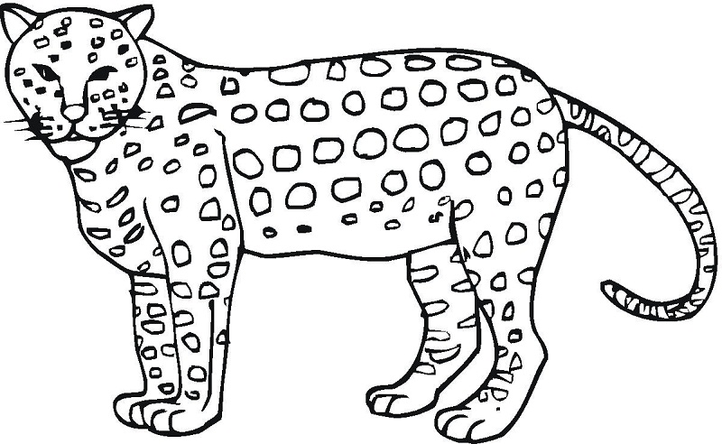 25 Best Cheetah Coloring Pages For Your Little Ones | 492x800