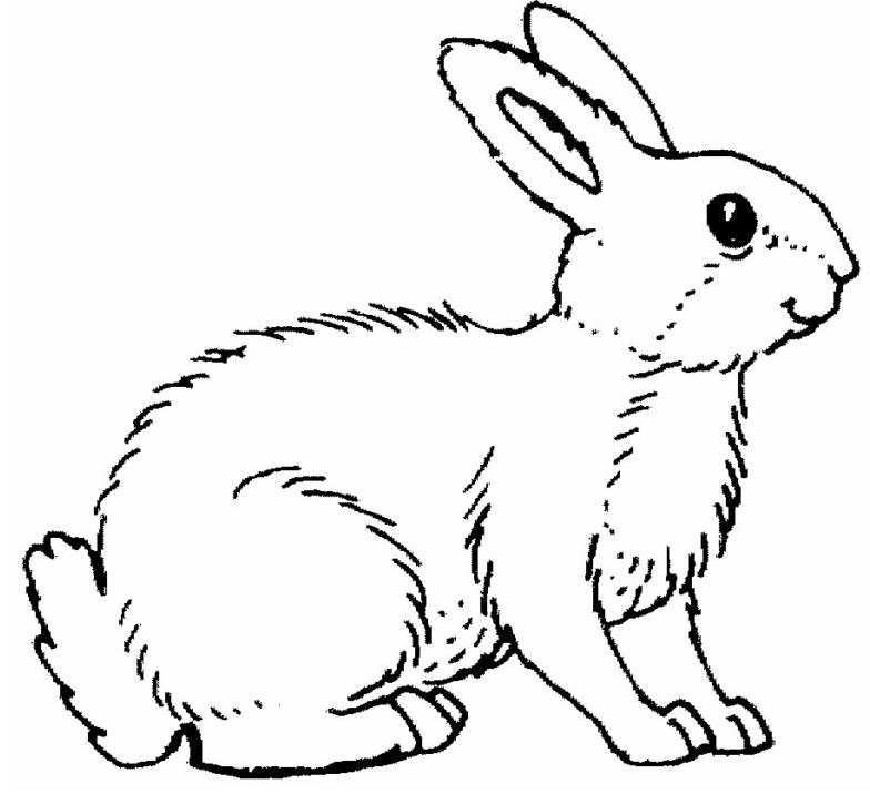 realistic baby bunny coloring pages - photo#24