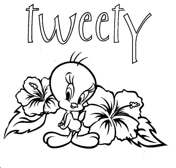 Printable Tweety Bird Coloring Pages Coloring Me