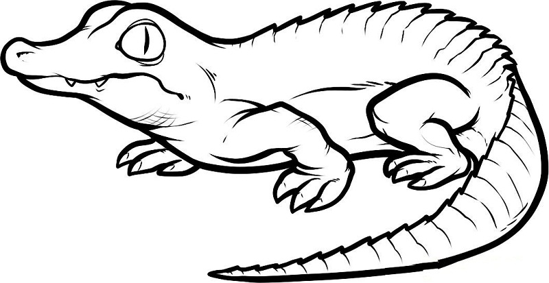 crocodile coloring pages printable crocodile coloring pages print