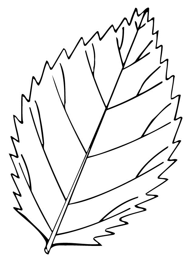 preschool fall leaves coloring pages decimamas
