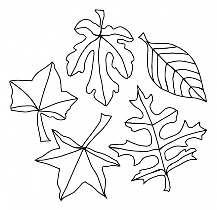 Printable Leaf Coloring Pages