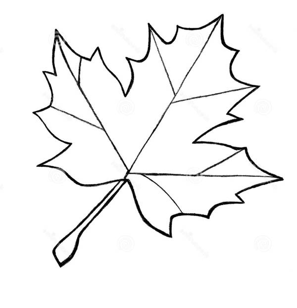 Printable Leaf Coloring Pages Me