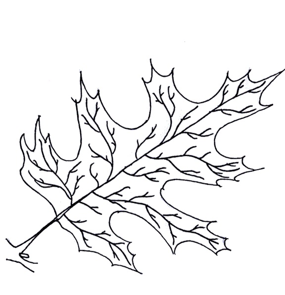 coloring pages oak leaf - photo#23