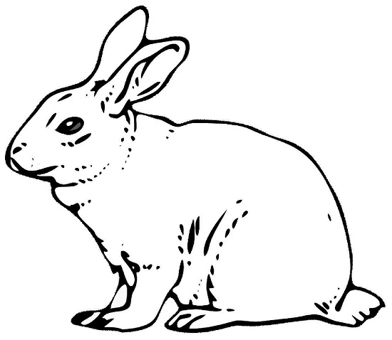 Line Drawing Rabbit : Rabbit coloring pages sketch page