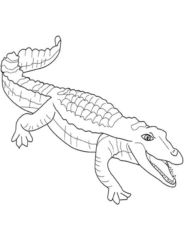 printable coloring pages crocodile - photo #19
