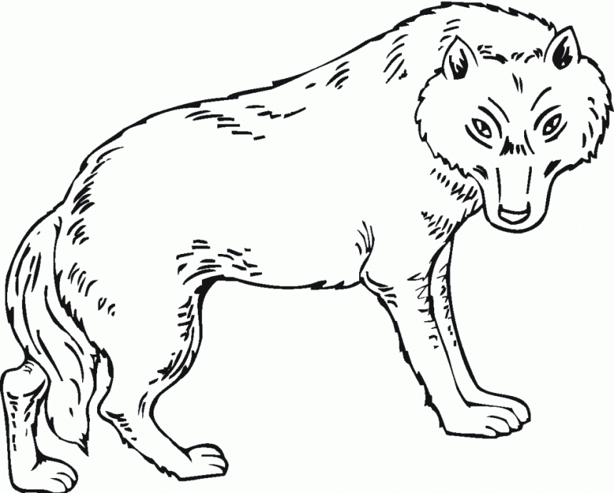 Printable Wolves Coloring Pages Coloringme Com