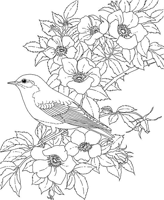 Printable Flowers Coloring Pages | Coloring Me