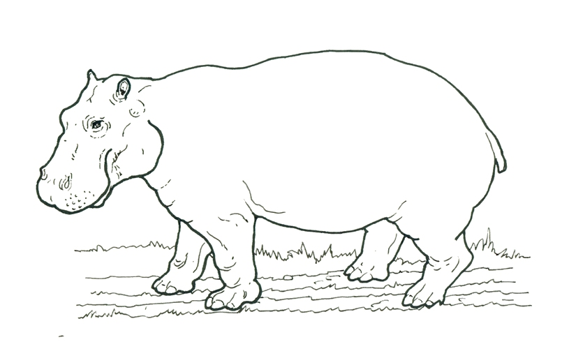 Realistic Grizzly Bear coloring page | Free Printable Coloring Pages | 490x825