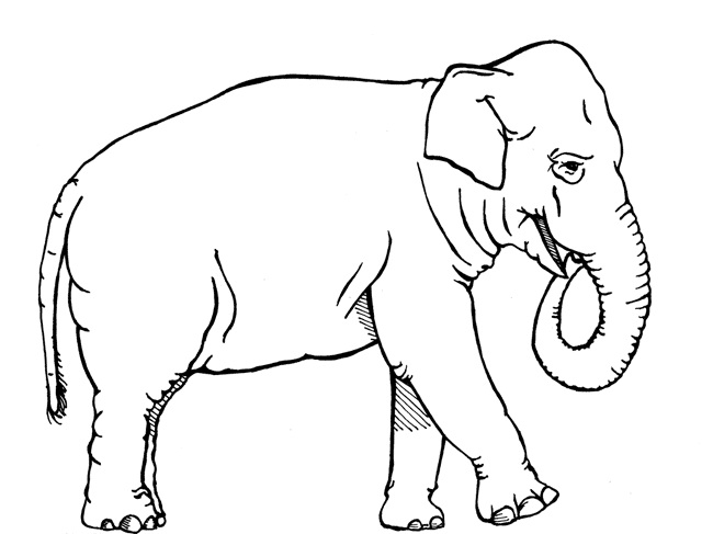 Printable Elephant Coloring Pages Coloring Me Free Elephant Hiding Coloring