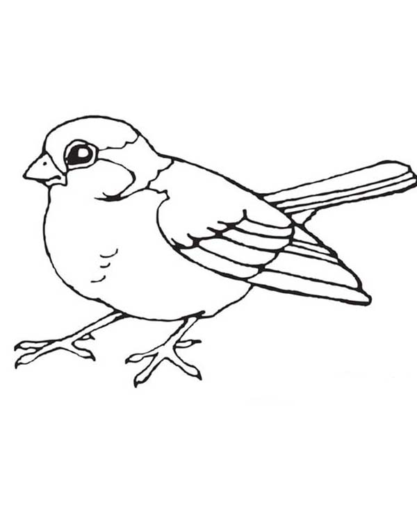 coloring book bird pages - photo#7