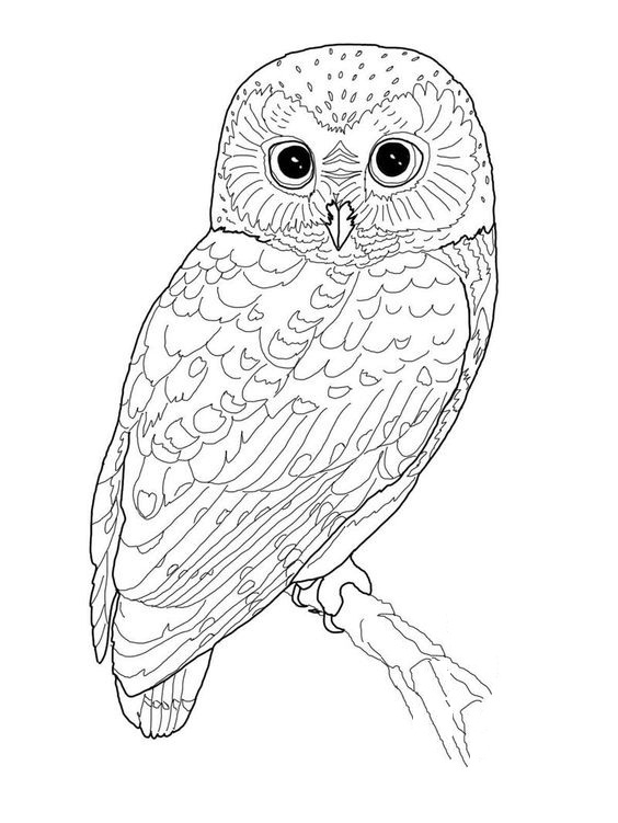 Printable Bird Coloring Pages Coloringmecom