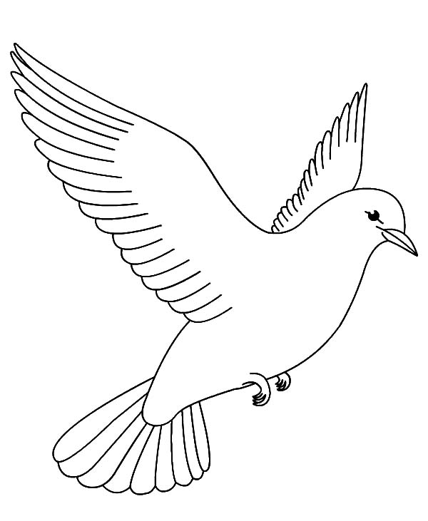 printable coloring page cardinal bird coloring pages