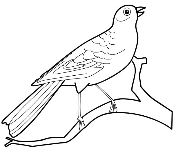 Birds Pictures For Coloring | 521x600