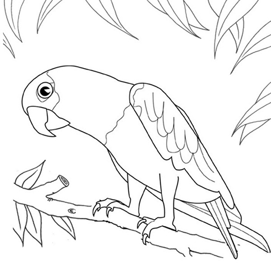 bird printable coloring pages