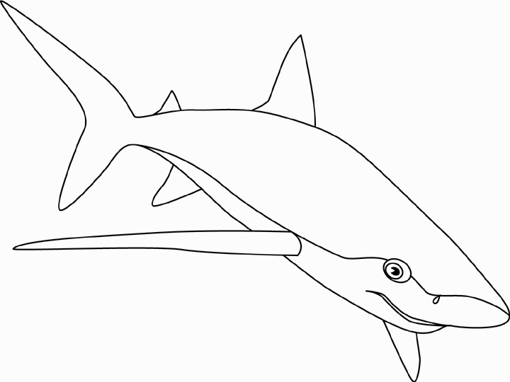 Bull Shark Coloring Pages | ColoringMe.com