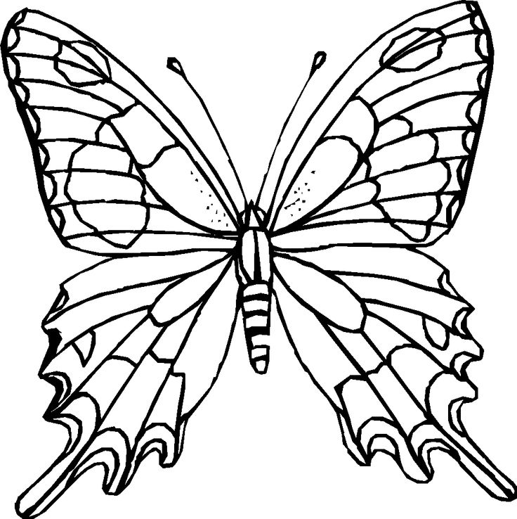 butterfly coloring sheets - Coloring Pages You Can Print
