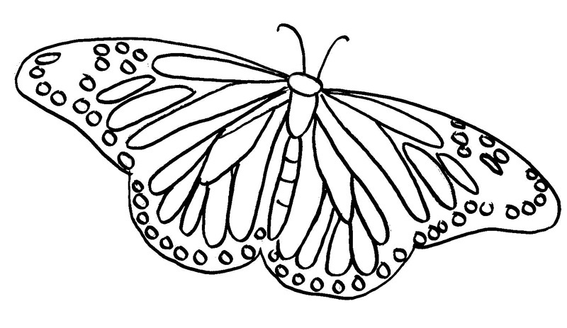 Printable Erfly Coloring Pages