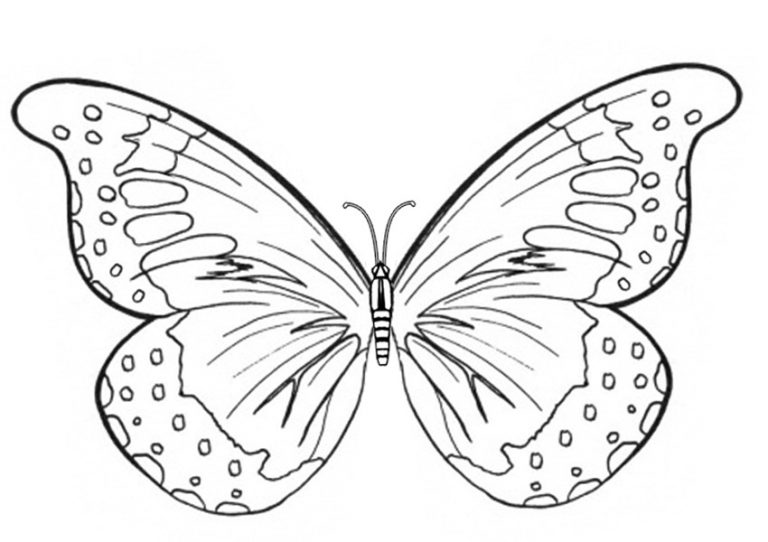 Cute butterflies coloring pages