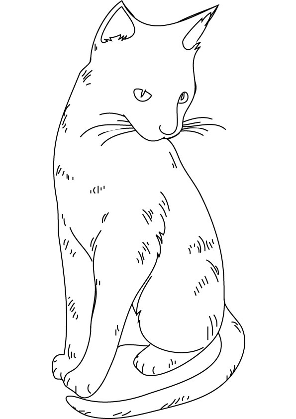 cat coloring pages realistic cat - photo#14