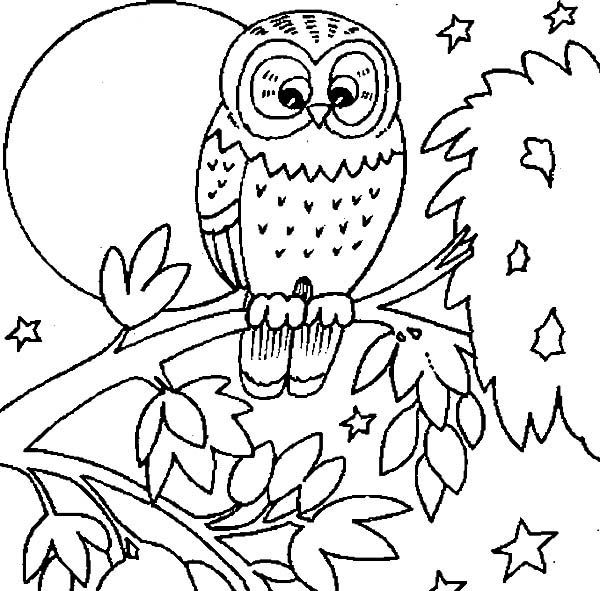 Printable Owl Coloring Pages | Coloring Me