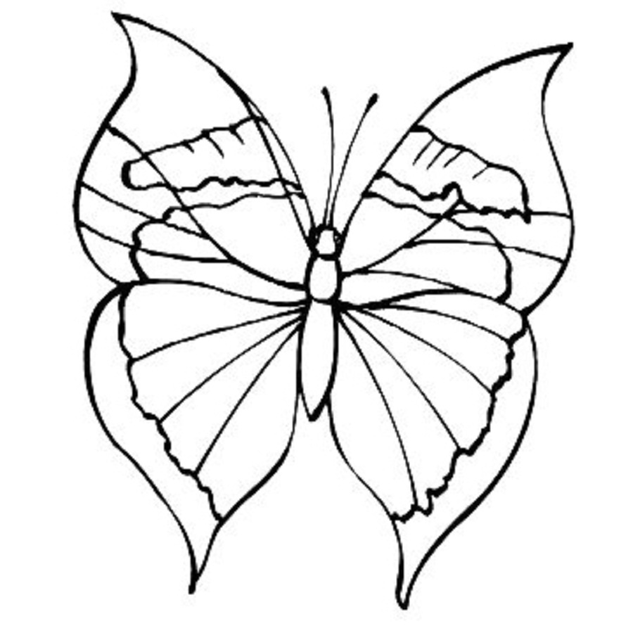 Butterfly coloring page symmetry - Coloring Pages Butterflies