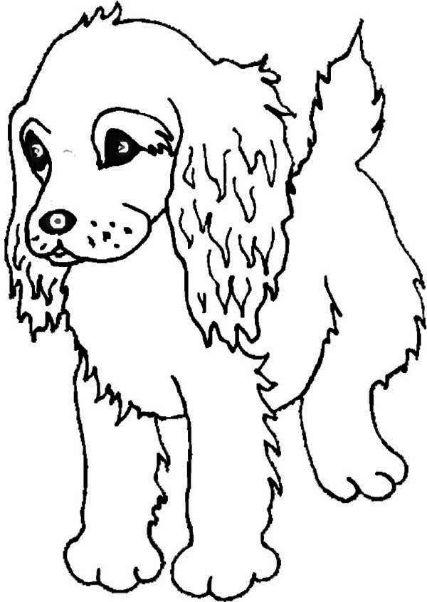 springer spaniel coloring pages - photo#17