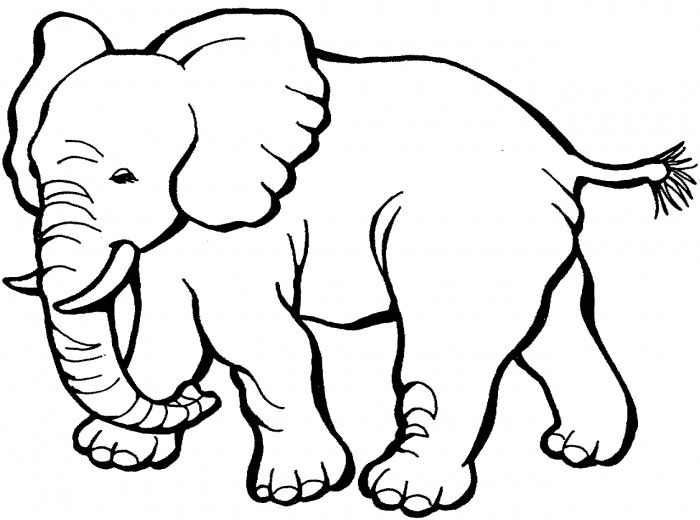 Elephant Coloring Sheets African Page
