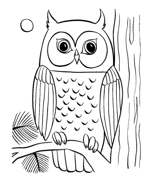 Printable Owl Coloring Pages Coloring Me Coloring Pages Of Owls