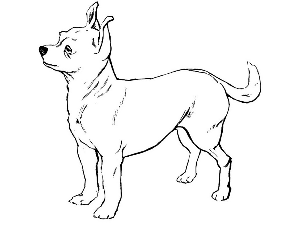 printable dog coloring pages coloring me