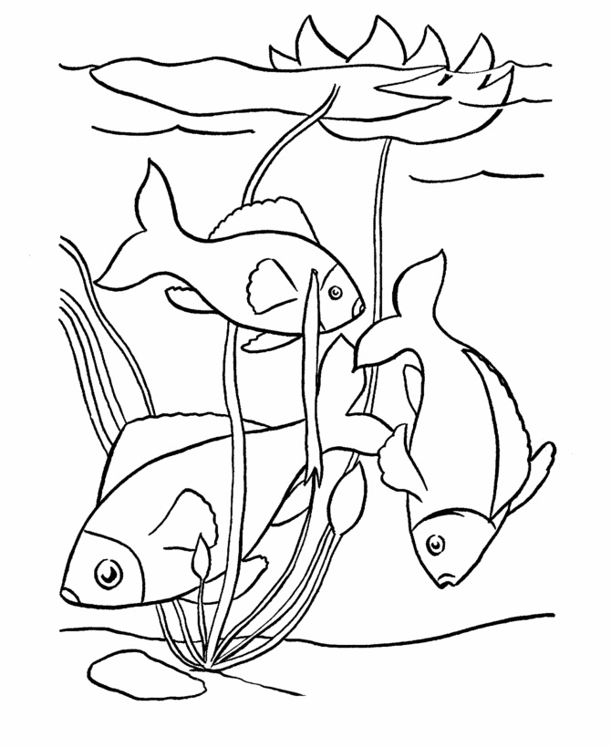 fish coloring pages to print - photo#14