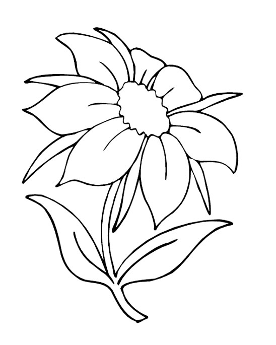 Printable Flowers Coloring Pages Coloringme Com