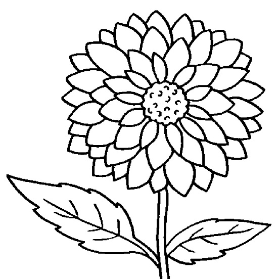pre school flower coloring pages - photo#7