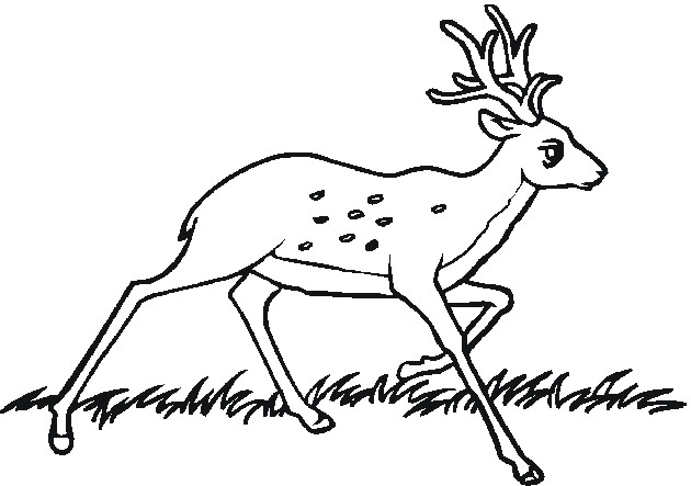 Printable Forest Animals Coloring Pages : Printable animal coloring pages me