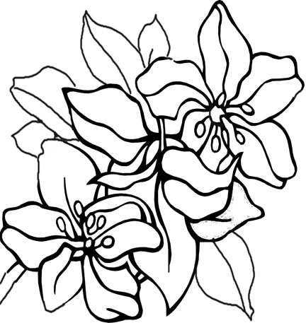 printable flowers coloring pages coloring me mini
