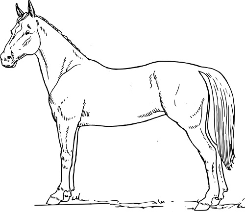free coloring pages online horses - photo #18