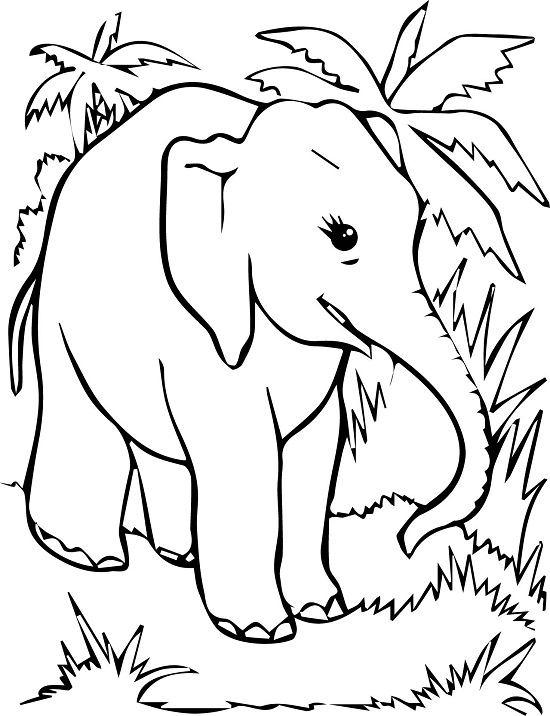 free elephant coloring pages - Free Elephant Coloring Pages