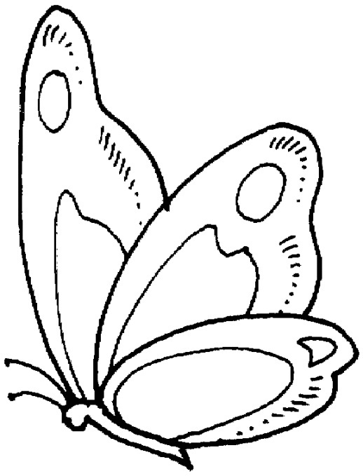 free printable butterfly coloring pages - Printable Butterfly Coloring Pages
