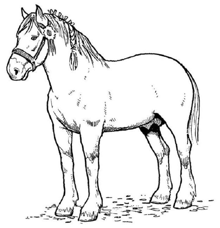 printable horse coloring pages | coloring me - Pictures Horses Coloring Pages