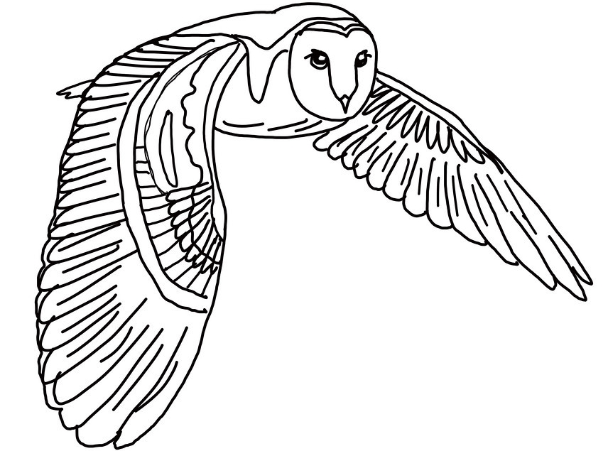 Printable Owl Coloring Pages  Coloring Me