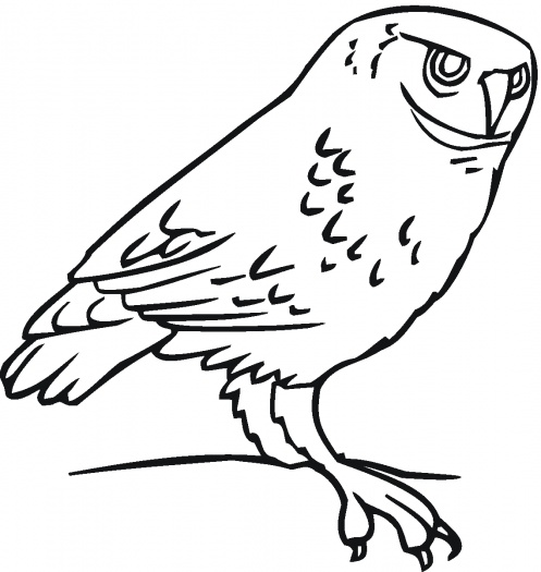Free Girl Owl Coloring Pages, Download Free Clip Art, Free Clip ...   525x497